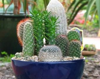 Desert Dish Garden Etsy