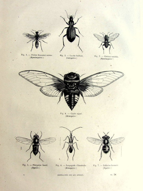 Vintage french insects print antique original by
