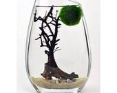 Marimo Terrarium // Japanese Moss Ball Aquarium // Slanted Rim Vase // Sea Fan // Shells // Green Gift // Home Decor
