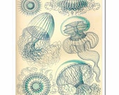 Haeckel Art - Giclee Posters and Prints - Art Nouveau Natural History Scientific Illustration - Ethereal Blue Jellyfish Art Print - Nautical