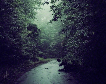 Inhale - Foggy Forest Photo - Misty Morning Photography - Nature - Trees - After the Rain - Wall Art