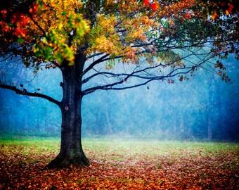Nature Photography, Colorful Landscape, Autumn Foliage, Tree, Fog Photography, Fall Decor