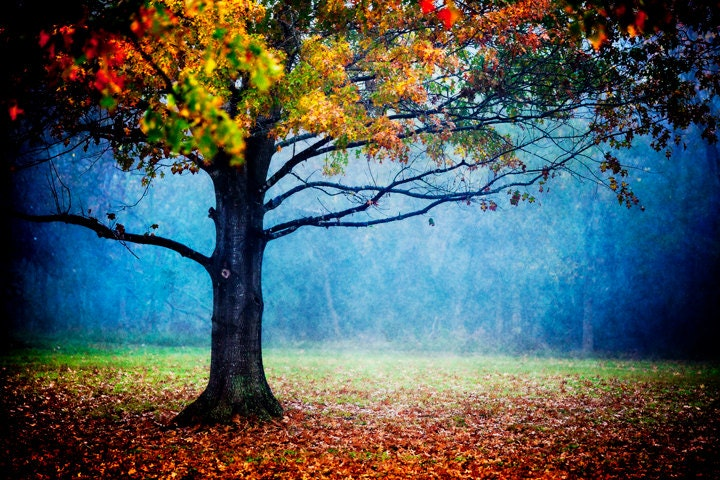 nature photography colorful landscape autumn foliage tree