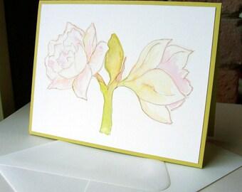 Cards - White Amaryllis, set of 4 - FREE USA Shipping