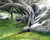 Ring of Kerry Irish Tree original pastel painting 9 x 12 inches