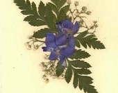 Note Card Ivory with Larkspur with Real Pressed Flowers