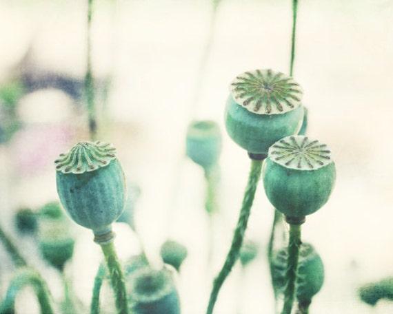 Botanical photography print mint green poppy seed pods wall art - Mint Pods