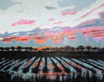 Sunset on sugarcane field