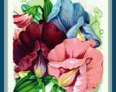Sweet Peas Flower Packet Refrigerator Magnet - FREE US SHIPPING