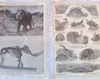 "The Story of the Mastodon and Animals That Lived Before Man --antique prints from ""Book of Knowledge"" 1912 (2 pages)"