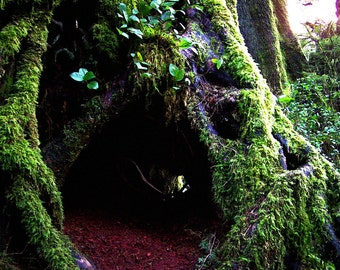 Enchanted Forest Woodland Fine Art Photography Mossy Sitka Spruce Oregon Greeting Card FAIRY DWELLING by Spinning Castle