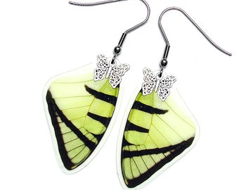 Real Butterfly Wing Earrings (Agetes Forewing - E006)
