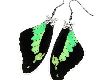 Real Butterfly Wing Earrings (Phorcas Forewing - E085)