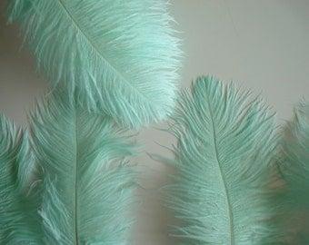 OSTRICH PLUMES , 1 piece, Mint Green , Aqua / 557