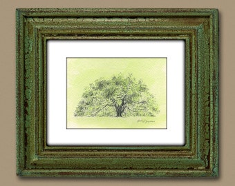 Majestic Live Oak Tree Drawing Art Print with Green Watercolor Wash