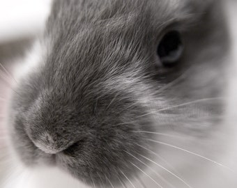 Fricassee - Bunny Rabbit - 4x6 Fine Art Photograph