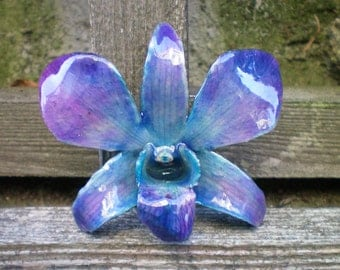 Free Shipping REAL Natural Shades of Blue and Magenta ORCHID Pin and Pendant