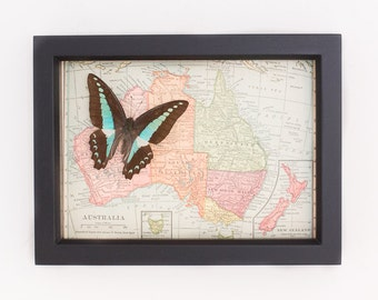 Vintage Map of Australia with real butterfly native to area Natural History