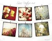 "Nature Postcards SET 04 - SIX 5,5""x5,5"" Fine Art Postcards"
