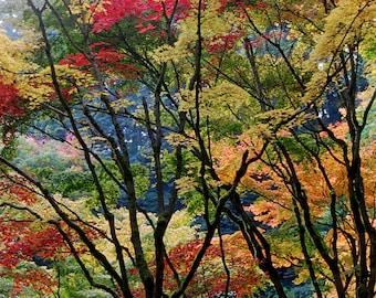 Fall at Portland Japanese Garden Fine Art  Digital Photographic Print 13x19