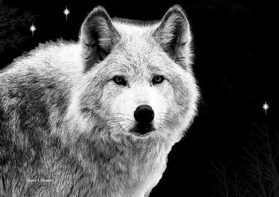 Výsledek obrázku pro big white dog at night