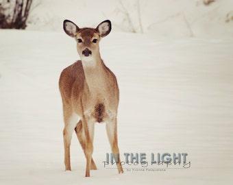 Young Deer - Fine Art Photography