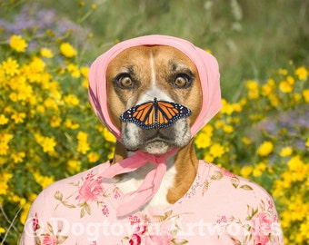 Butterfly Nose, large original photograph of boxer dog wearing flowered pink sweater with a monarch butterfly on her nose