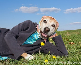 Stop and Sniff the Flowers, large original photograph of boxer dog wearing clothes and admiring a dandelion flower
