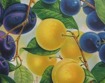 Plums Botanical Illustration 1920's Fruit Print Framed Gardening Gift