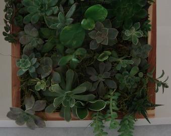 """Vertical Succulent Wall Garden - All Natural Living Art - 10"""" x 10"""" Hanging Cedar Wood Planter"""