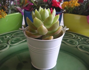 24 Mini White Or Silver Tin Pails, Succulent Favor Size, DIY Weddings, Rustic, Shabby Chic, Succulent Container