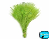 Wholesale Peacock Feathers, 100 Pieces - LIME GREEN Bleached and Dyed Tails Peacock Feathers (bulk) : 1295