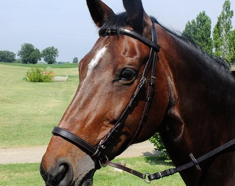 Custom Horse Bitless Bridle with Padded Noseband and Browband