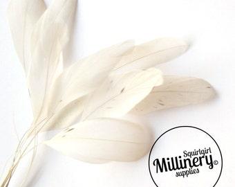Stripped Coque Feather Hat Mount Ivory (10 Feathers) for Millinery & Fascinators