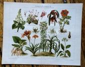 1894 house plants & flowers original antique botanical flora print no 1