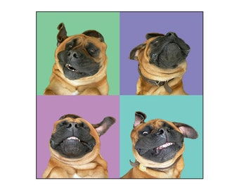Smiling Dog, Dog Art, Animal Photography, Mastiff Art Print, Fine Art Photography
