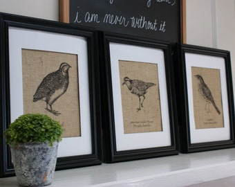 Free US Shipping...Set of Three Antique-Style Burlap Bird Illustrations. Prints only.