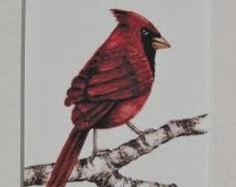 Fine Art Print - Cardinal -  Bird - Watercolor ACEO with Mat - Artist Signed