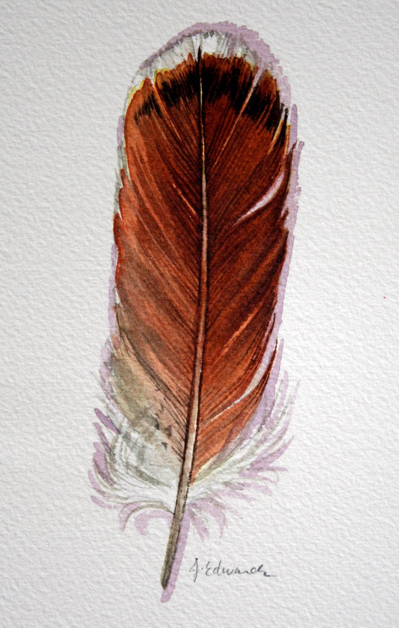 red tailed hawk feather original watercolor