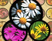 """Bright Daisies 1"""" Bottlecap Rounds Digital Collage Sheet--Instant Download"""