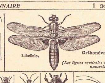Beautiful Antique French Print 1920s engravings Insects bees butterflies Illustrated book page