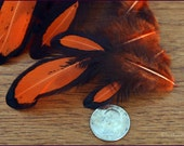 Orange Hen Feather Laced Orange Craft Feathers Bright Orange Feathers Hair Braiding Halloween Craft Supplies Costume Making, 10