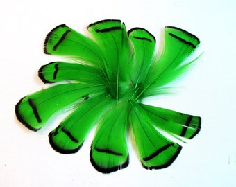 Green Feathers Lady Amherst pheasant tippets Feathers for facinators earrings hair fly tying crafts 10 pk LATD-01