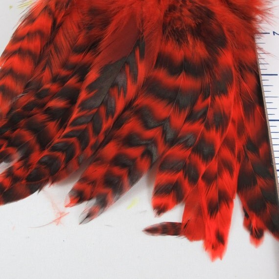Orange Chinchilla Strung Schlappen Feathers 6 to 8 inches   SCHCD  03