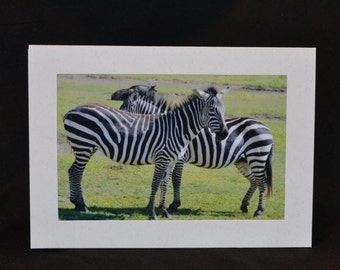 Original Photography Note Card - Zebra 2