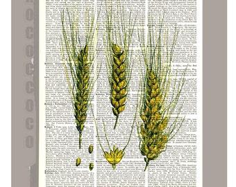 WHEAT Illustration Print on Vintage Dictionary Book page -  Kitchen decor, Botanical art, Artwork on a page from vintage Dictionary