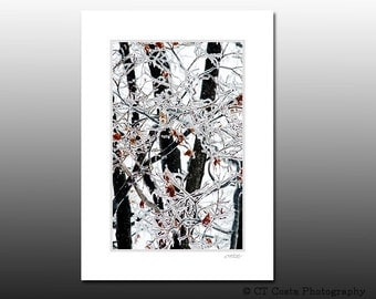 Winter Ice Nature Print, Cool Branches, Signed Matted Print, Fits 5x7 inch frame