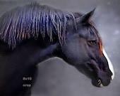 BLACK HORSE - Stallion - denim purple rust - Cowgirl Cowboy Nursery Office - watercolor-like original fine art 8x10 with 11x14 mat