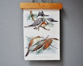 Vintage Bird Book Plate - Northern Shrike - Natural Decor