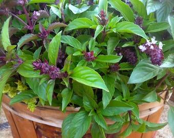 SALE! Sweet Thai Basil Culinary Herb Organically Grown Heirloom Easy to Grow Rare Seeds